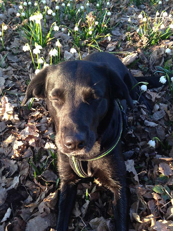Hundegestützte Psychotherapie